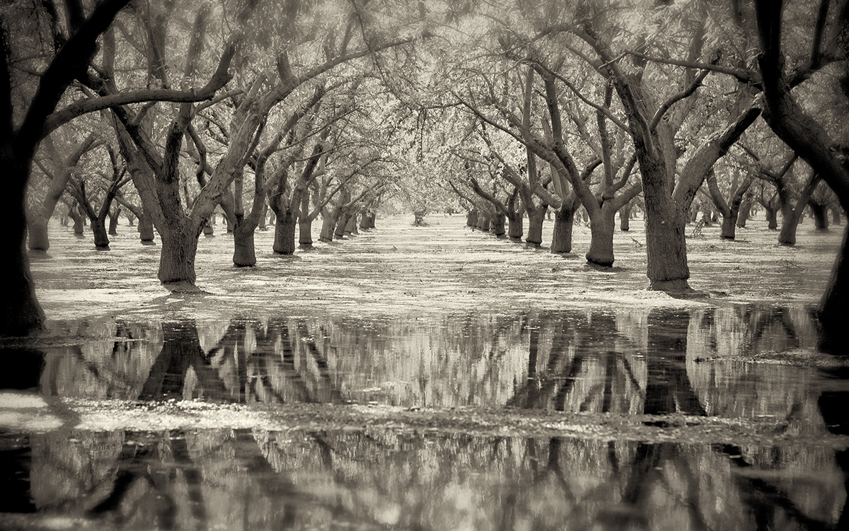Flooded Almonds, Summer