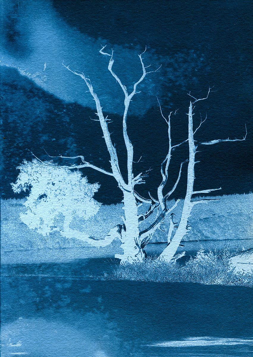 Moonlight, Anacortes