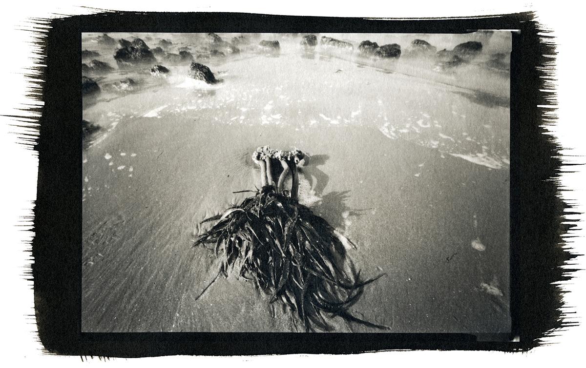 Kelp on the Rocks, Strawberry Hills, Oregon