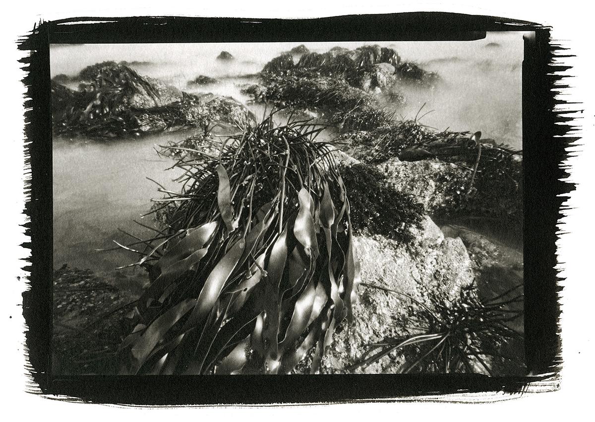 Stranded Sea Palm, Seal Rock, Oregon