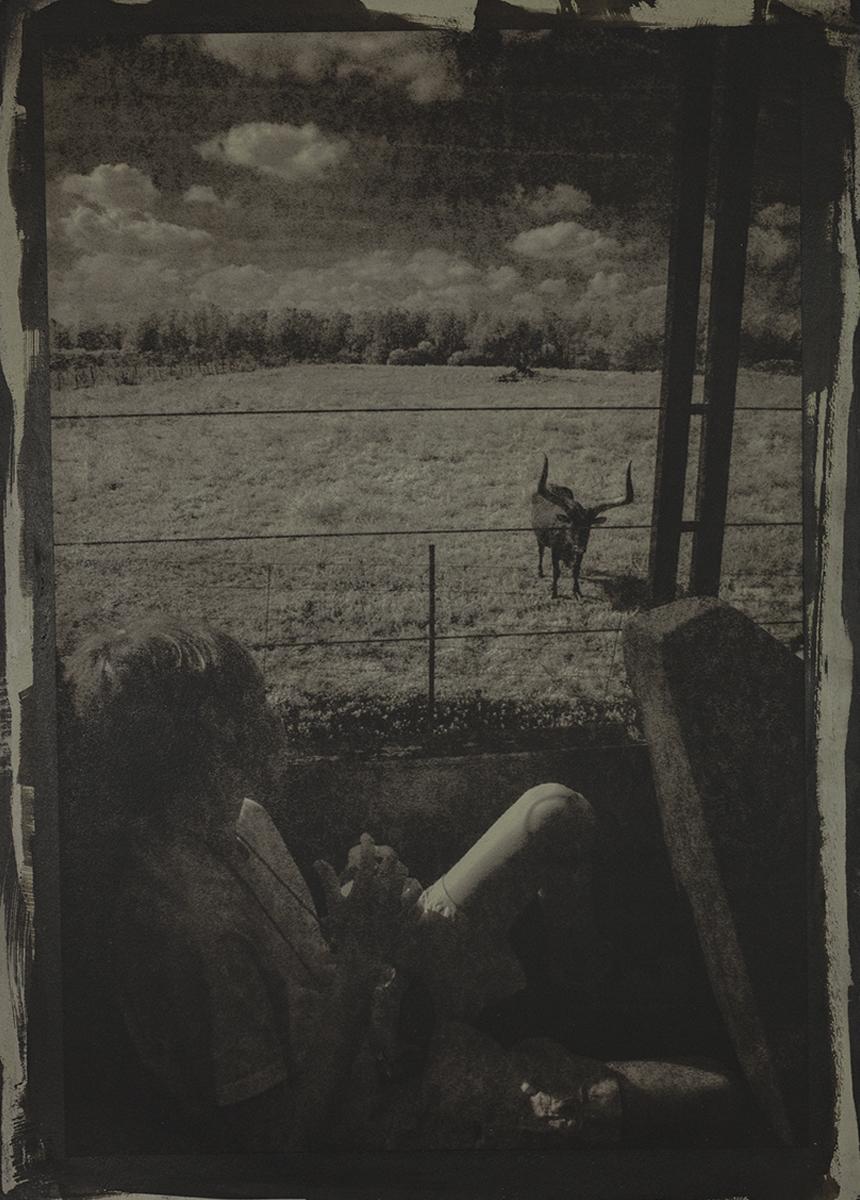 Bull View