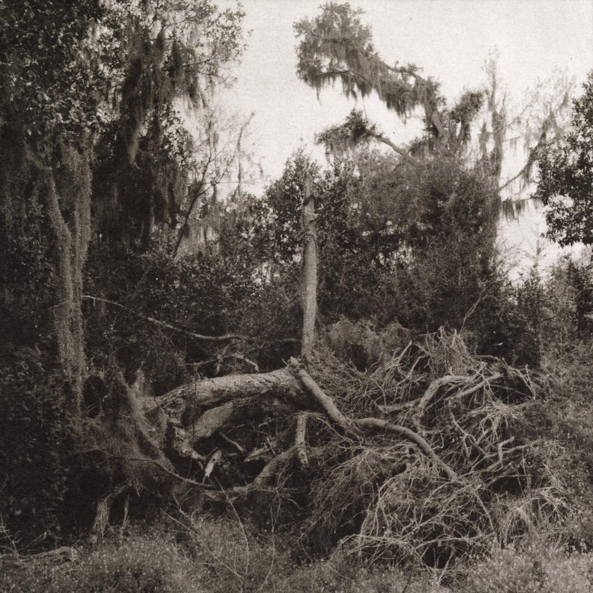Fallen Tree, Savannah Wildlife Refuge, Savannah, GA