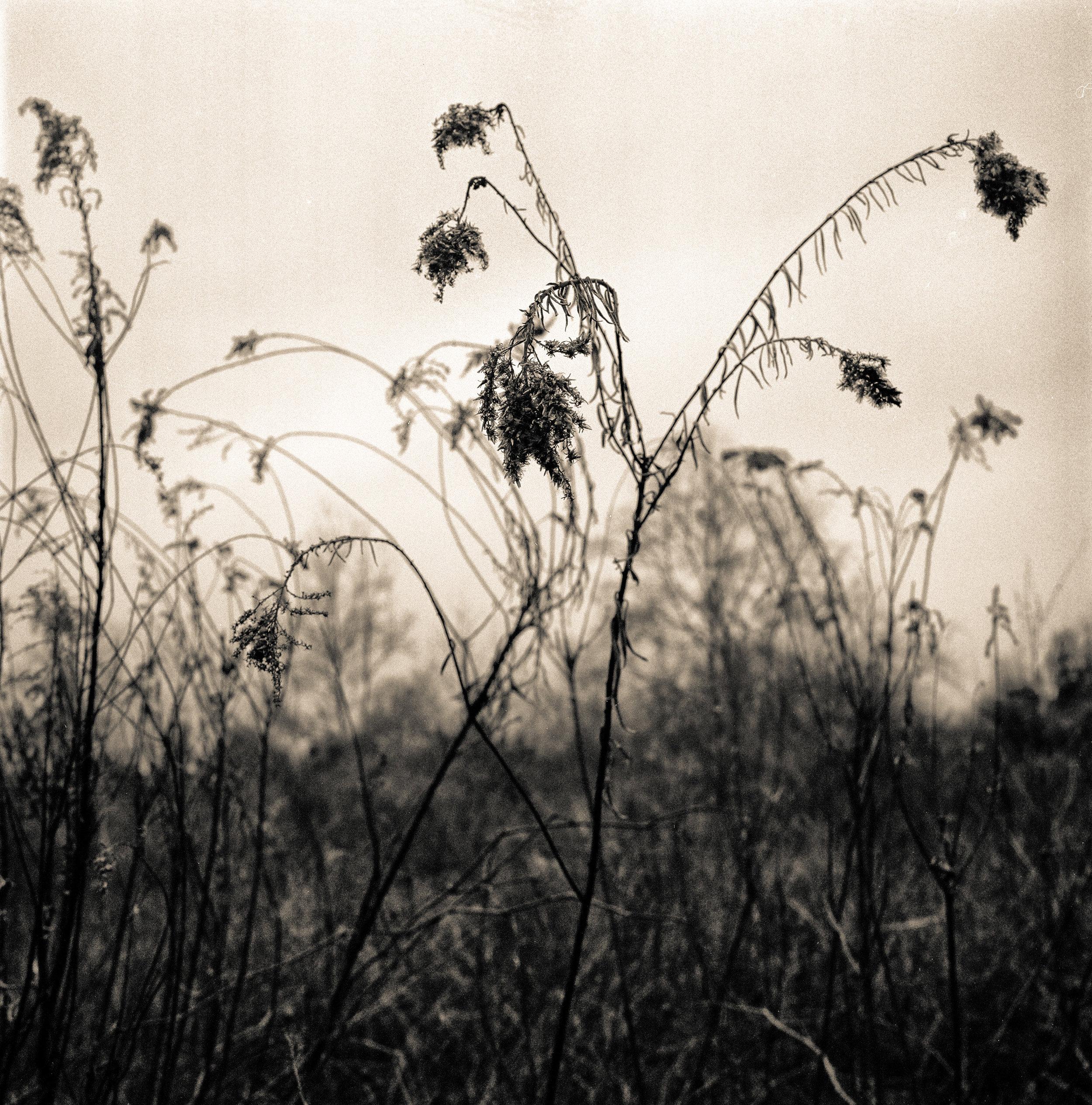 Southern Landscape #1