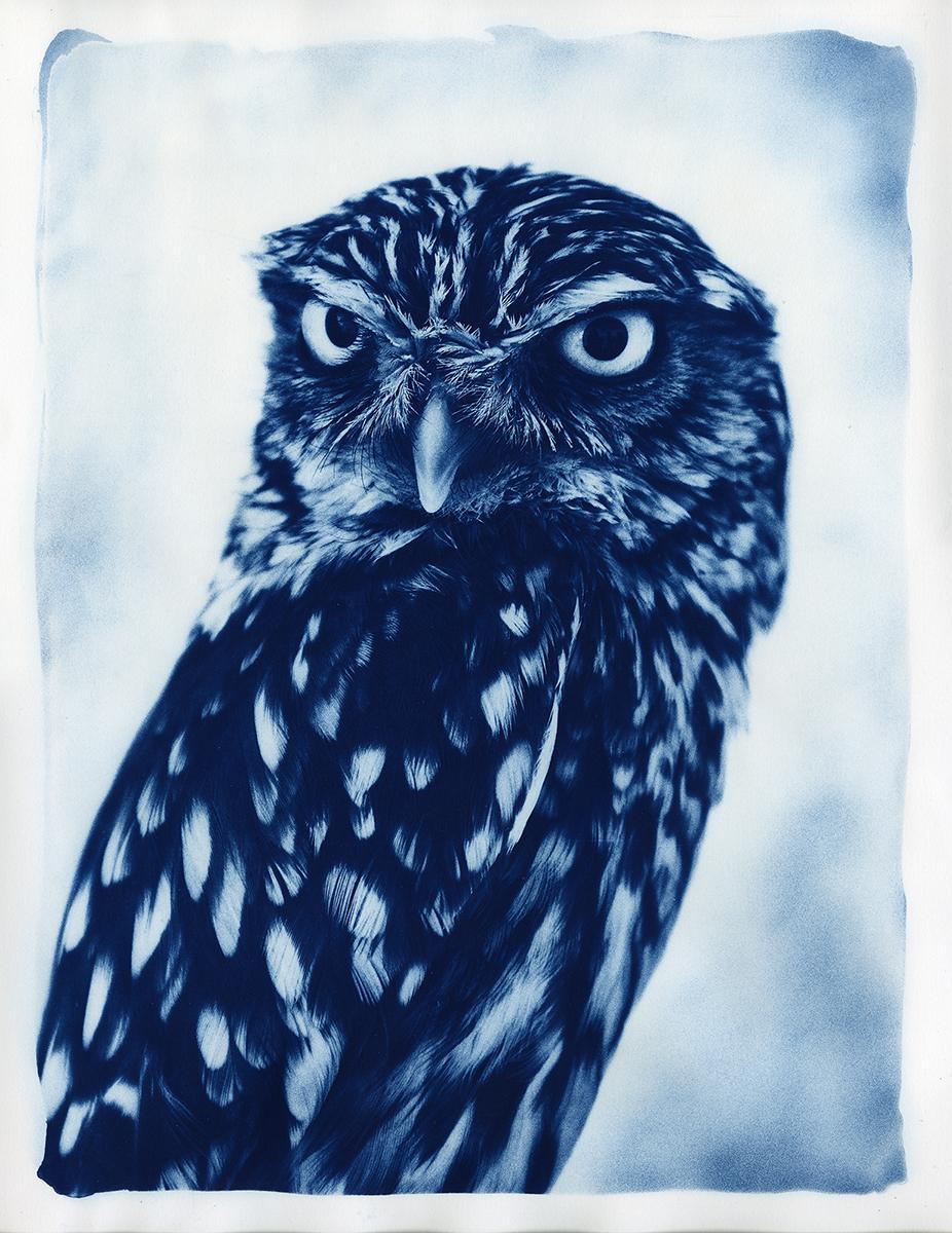 Big Little Owl