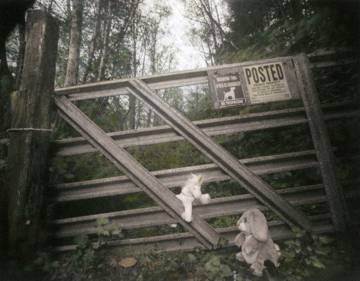 Beyond Her Garden Gate 5