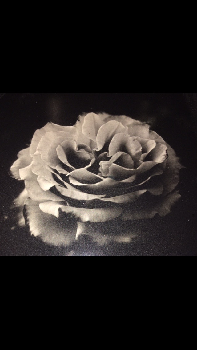 A Rose by Definition