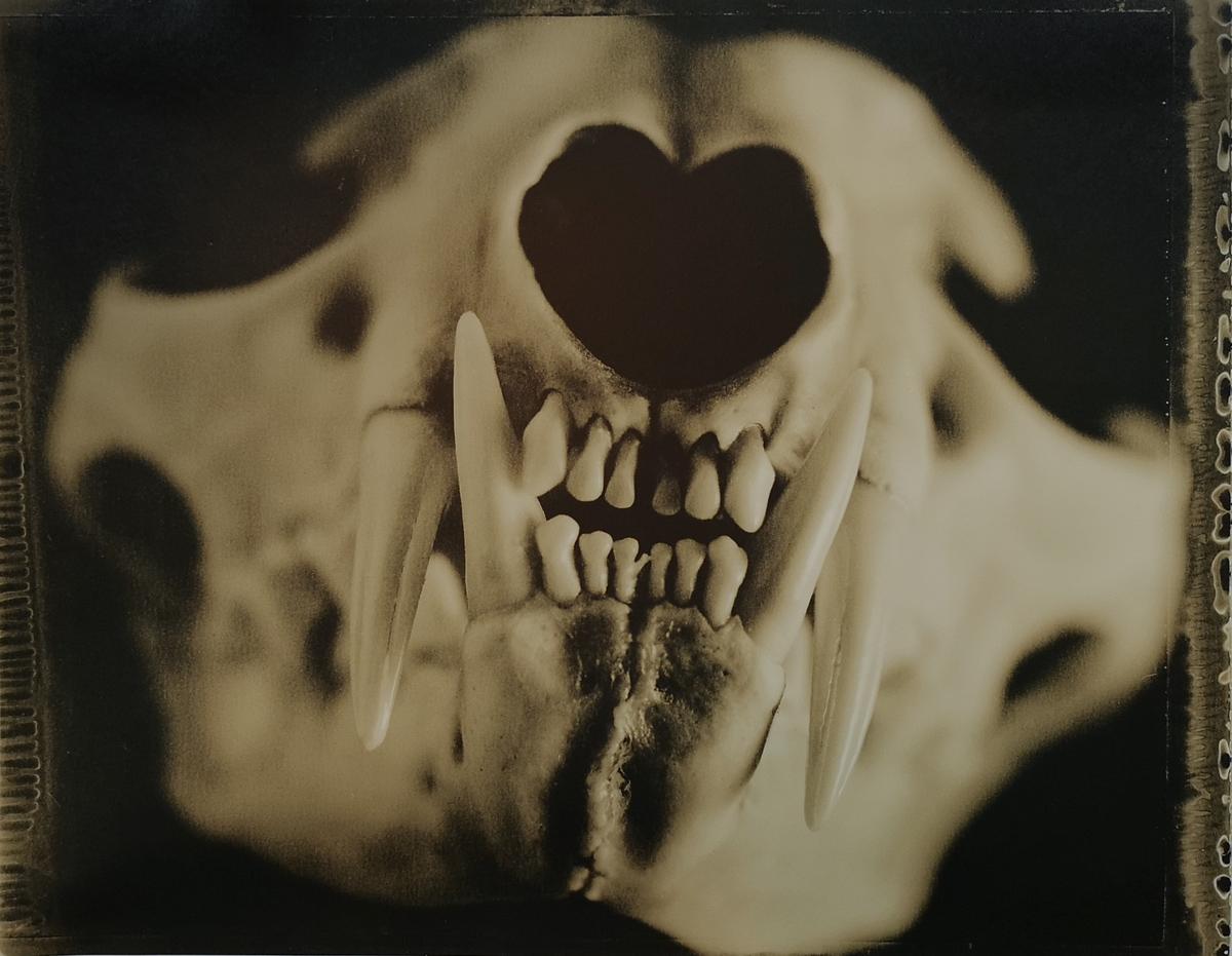 Lynx Skull #1