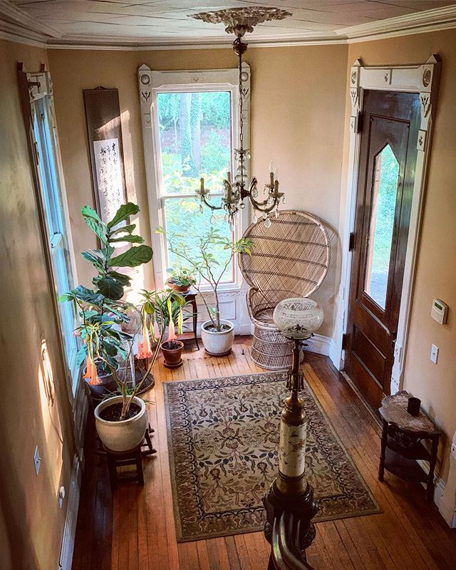 The burgeoning plant collection in the entry hall. We took the brugmansias in from the garden the other day. Hope they like their winter spot!