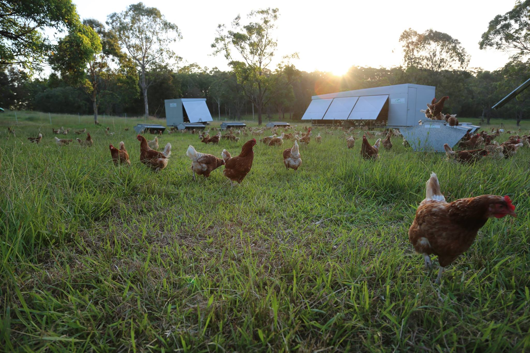 Mobile caravans for our chickens