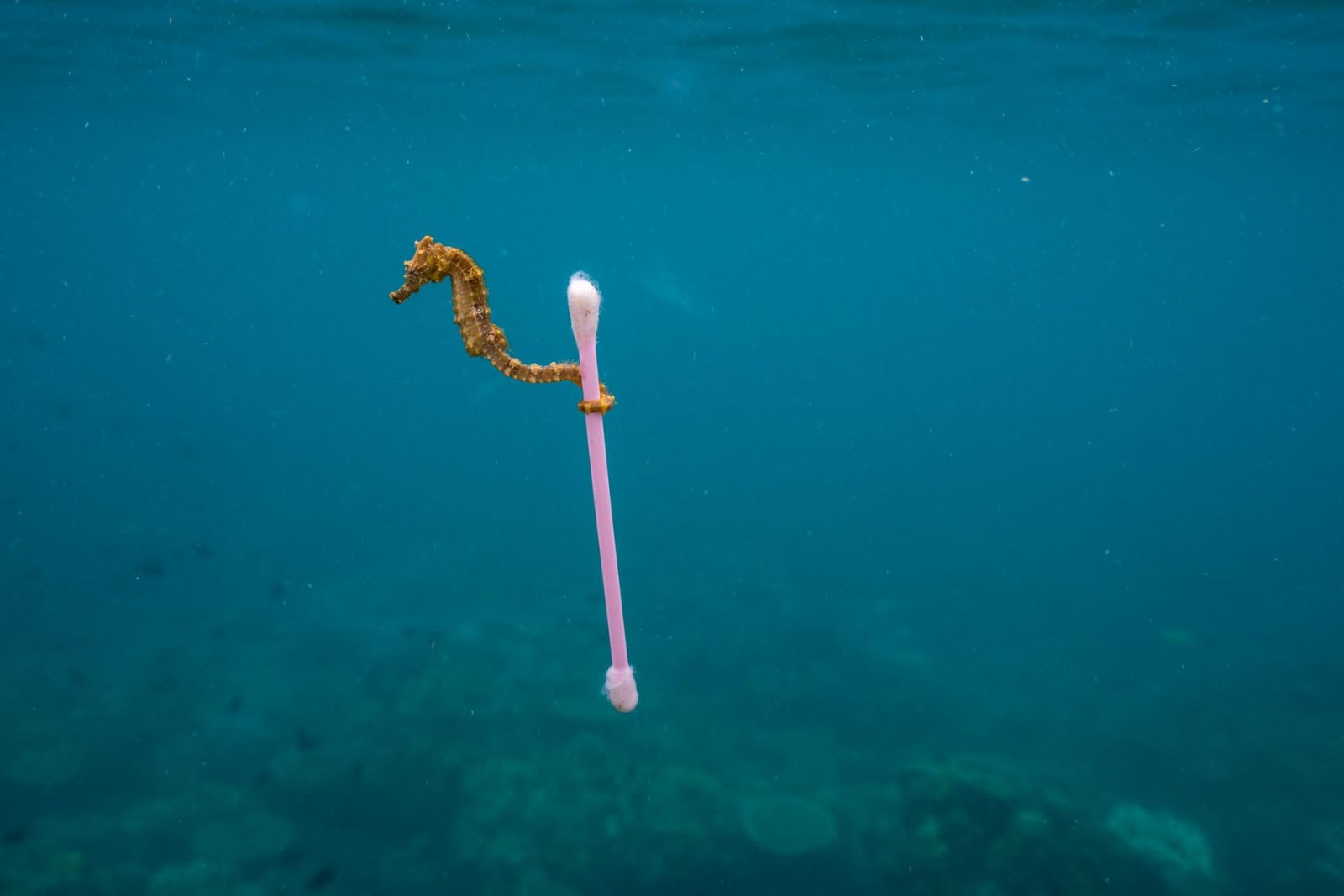 Image by  Justin Hofman/ National Geographic .