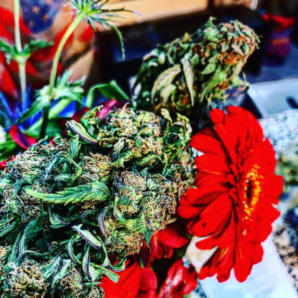 Casa Humboldt flowers, photo by Warren Bobrow
