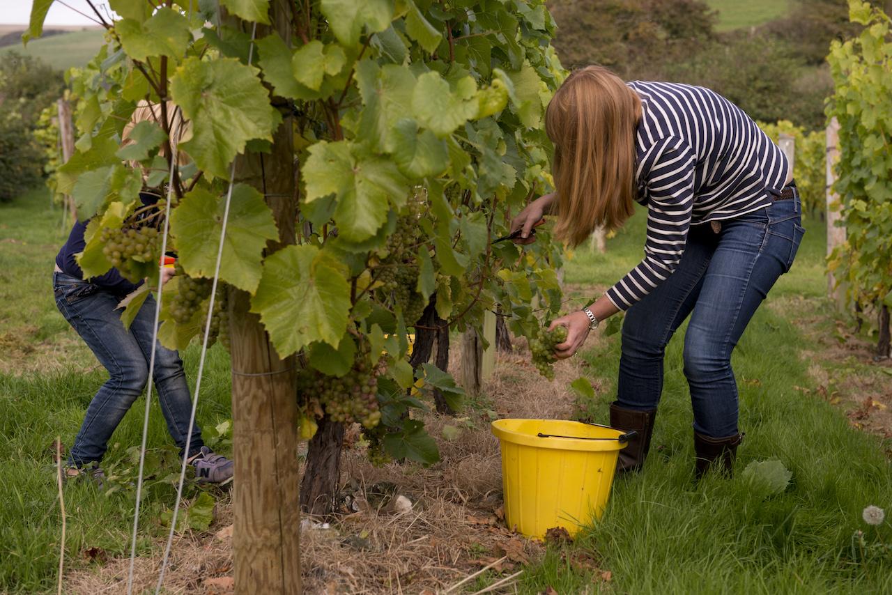 BB Harvest15 005.jpg