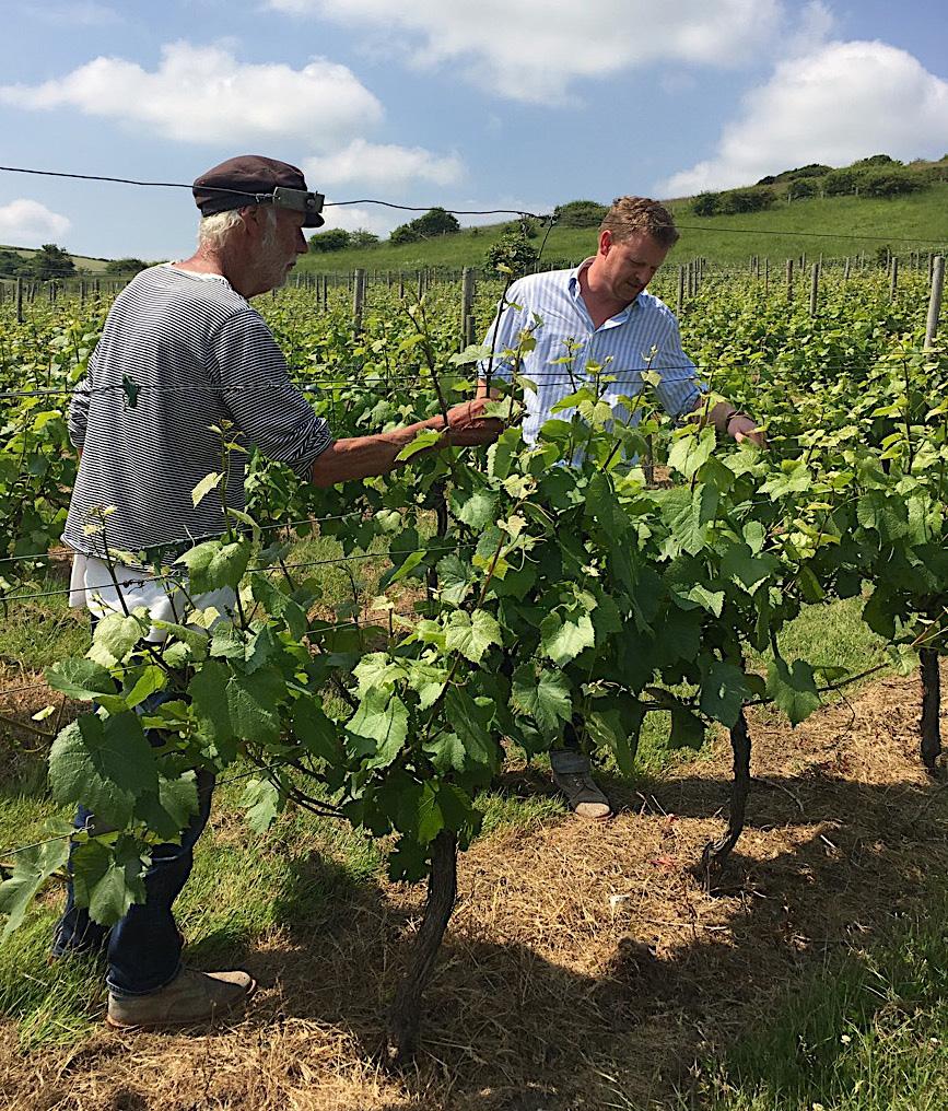 Peter-and-Dermot-check-vines-ed-jpgb.jpg