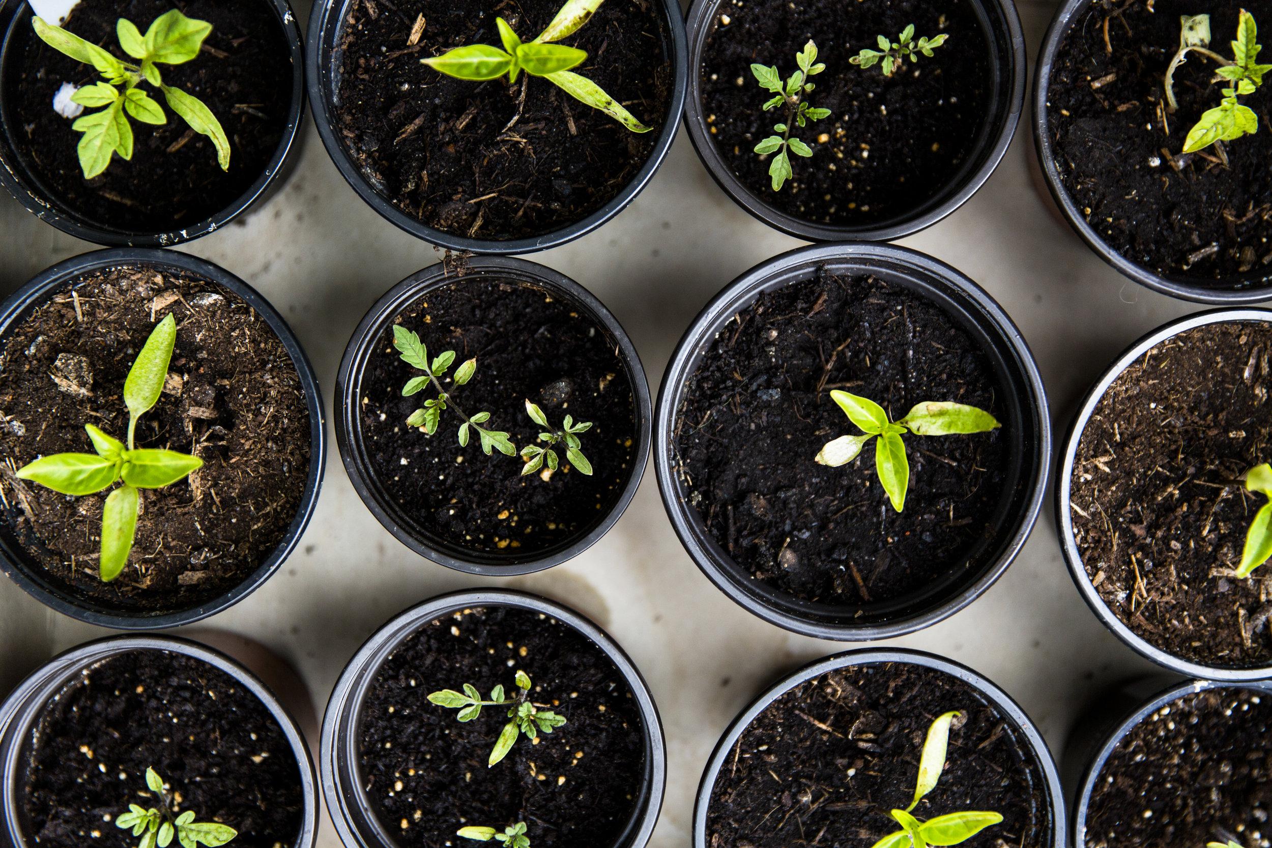 Growth & Establishment - Third Cycle