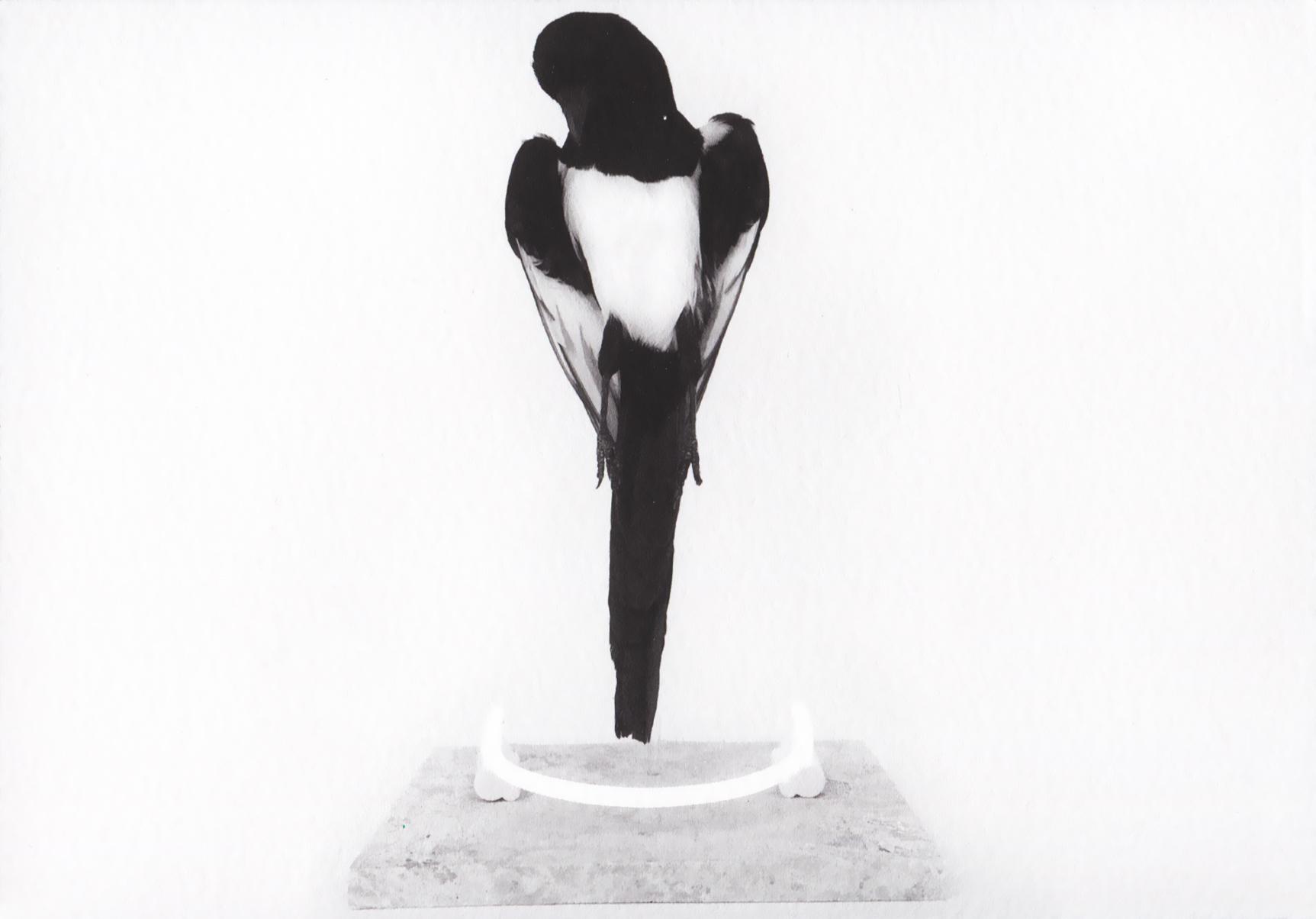 Harriet Horton - Pause (black & white).jpg