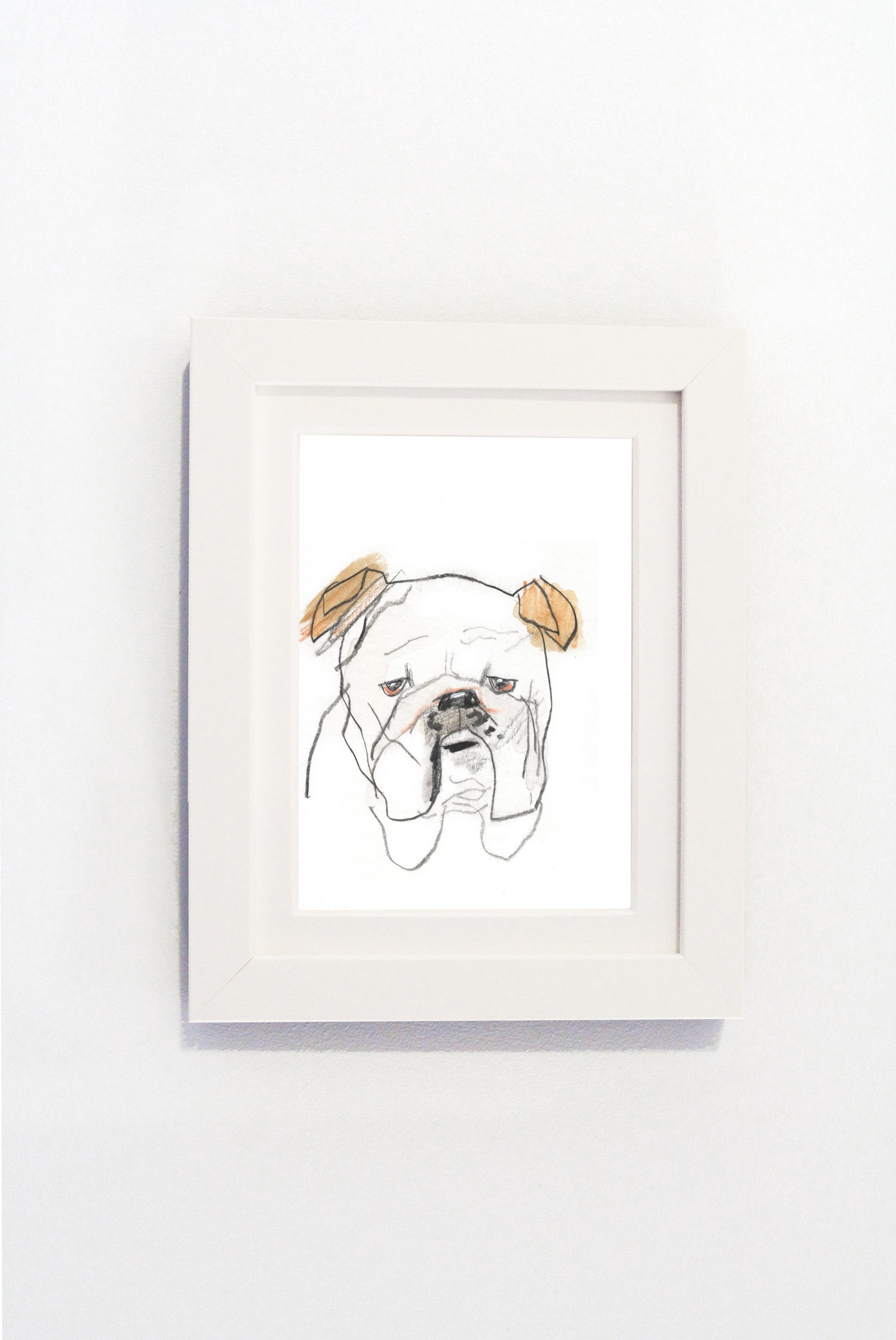 Bulldog white.jpg