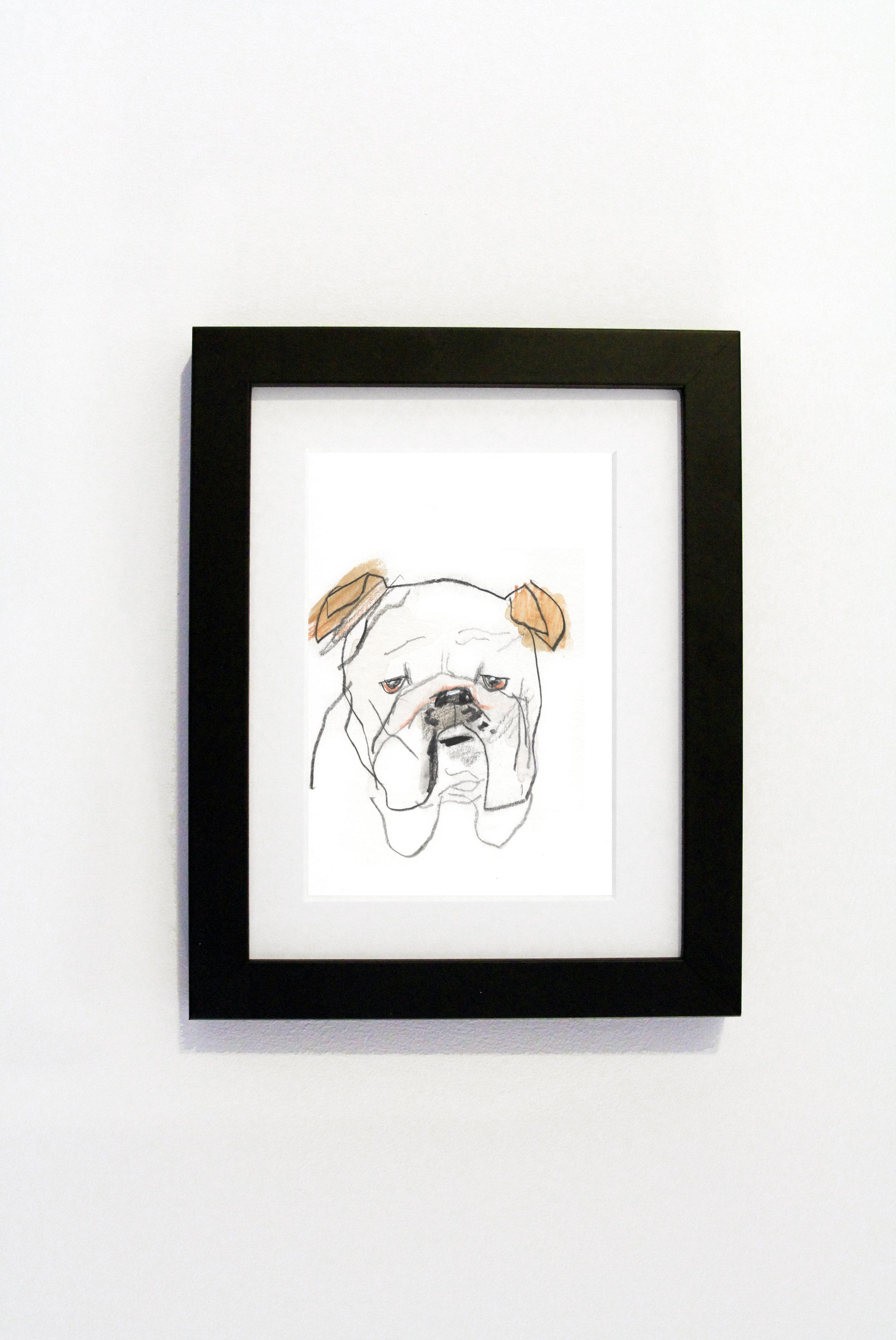 Bulldog black.jpg