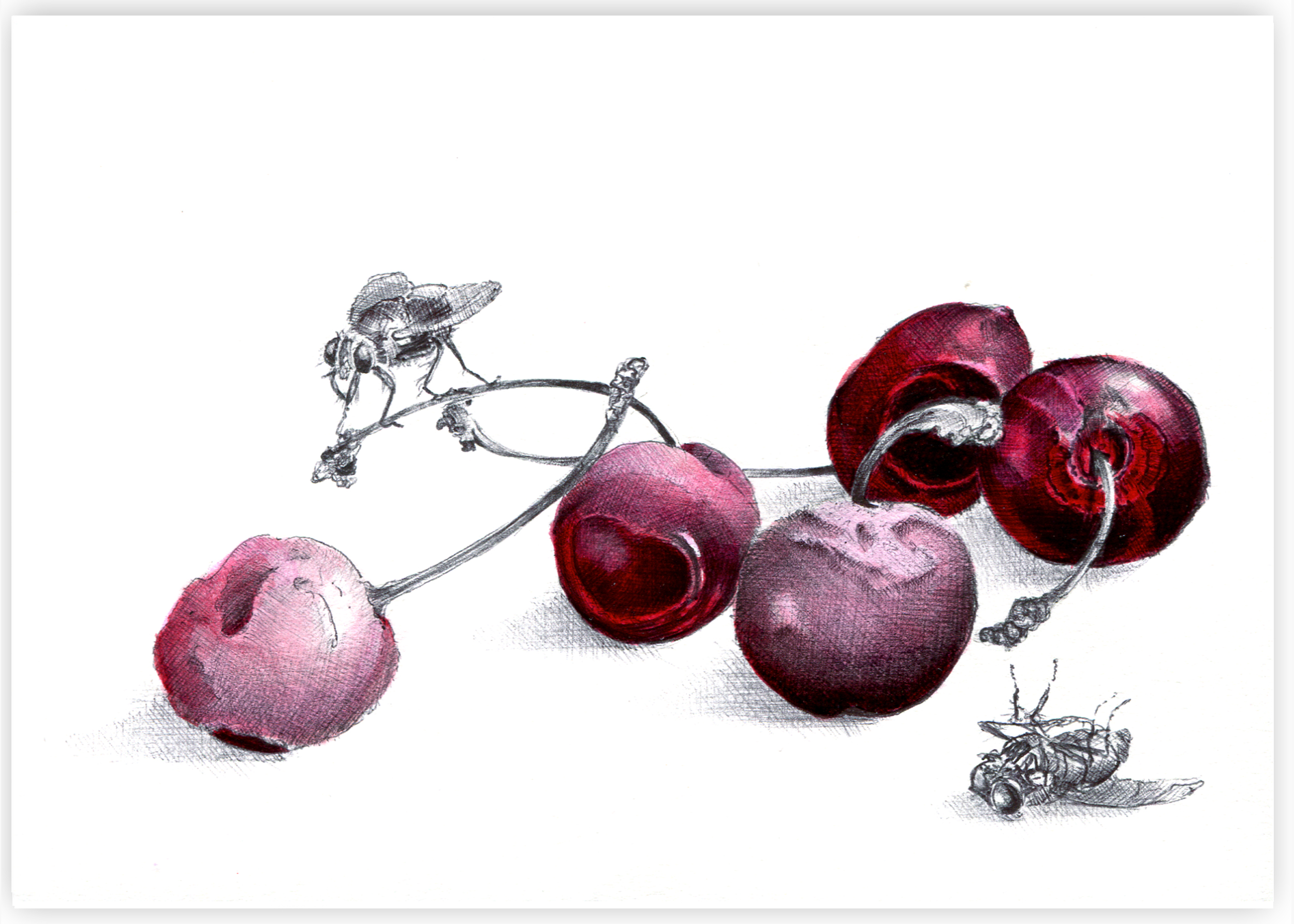 Cherries grey.jpg