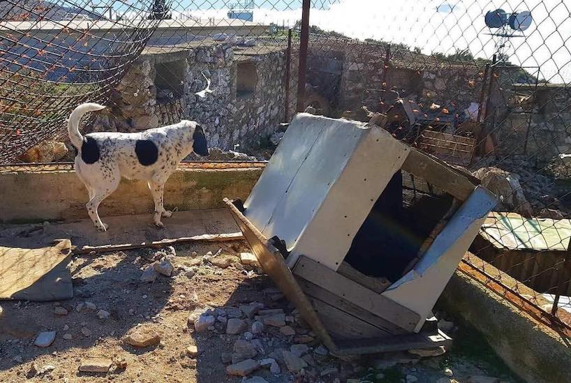 Overturned dog kennel