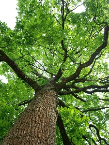 A-tree-with-special-symbolism.jpg