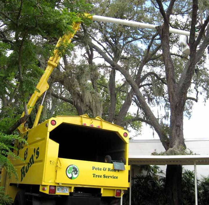 Equipment used for tree trimming maintenance services in Palm Harbor, FL