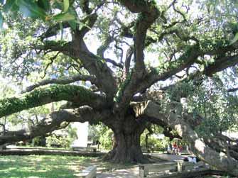 sm-prtree-huge-tree.jpg