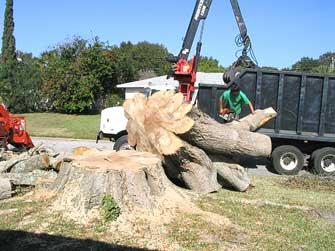 sm-prtree-tree-cutting-4.jpg