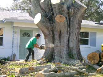 sm-prtree-tree-cutting-3.jpg