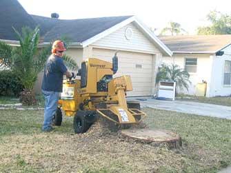 sm-prtree-stump-removal.jpg