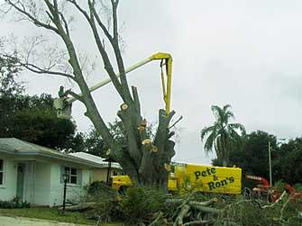 sm-prtree-tree-cutting.jpg