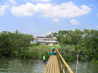 sm-prtree-mangroves-2.jpg