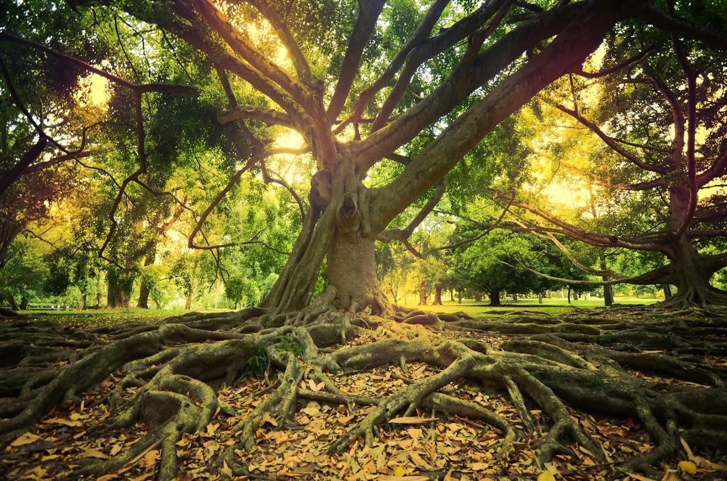 preventing root rot.jpg
