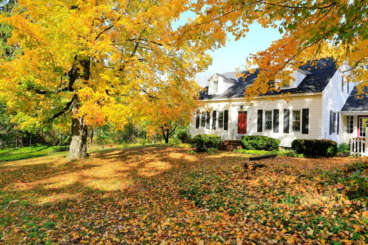 house with leaves.jpg