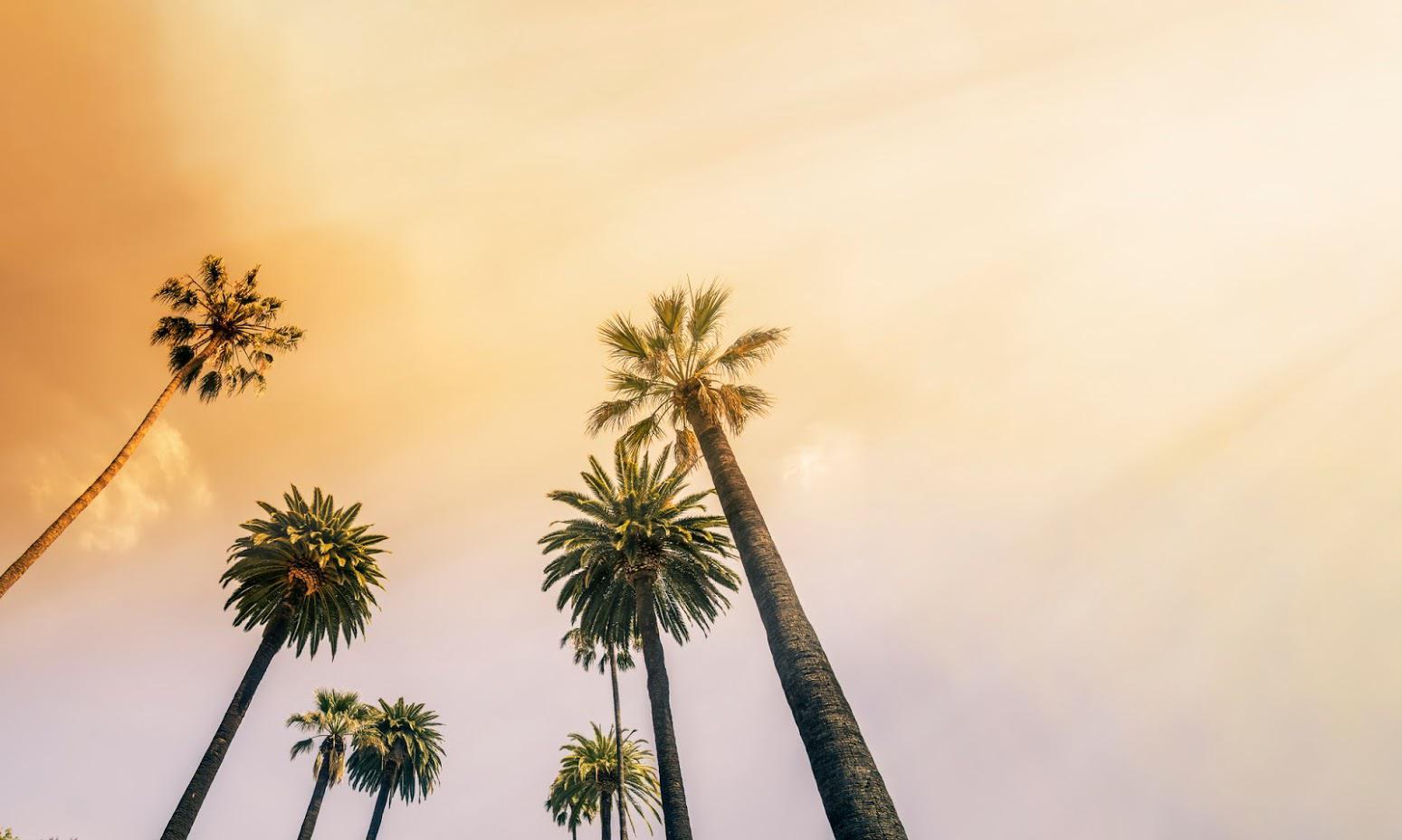palms trees.jpg