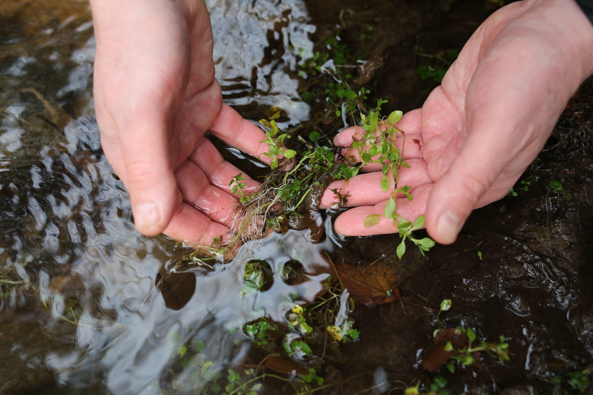 Bekkekarse: - Å gå over vann etter bekkekarse.