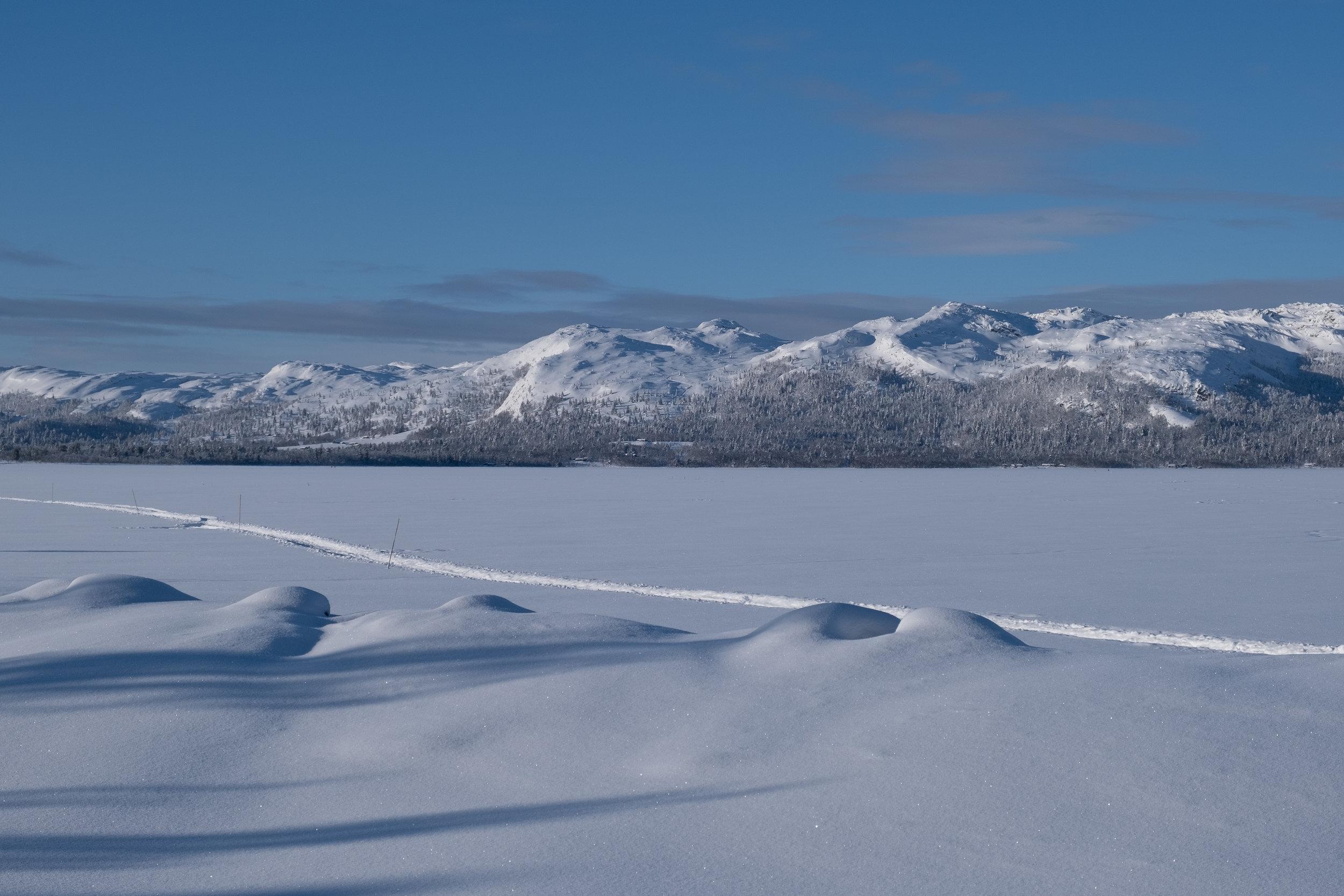 Kald fisk - Tusen meter over havet pågår det hver vinter en taus kamp mot kulda.