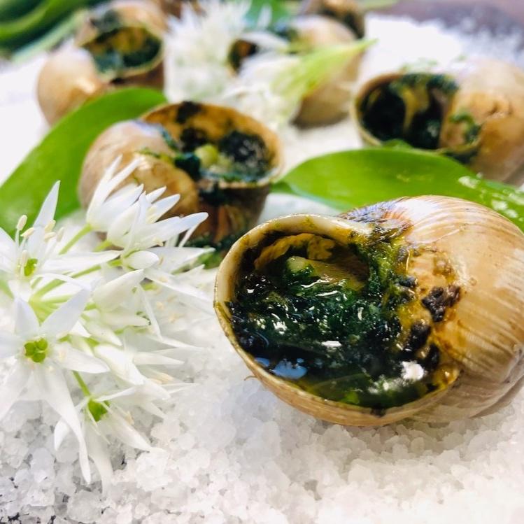 Snegle for langsomme dager - Vinbergsneglene har tronet på franske menyer i flere hundre år. En koloni på noen tusen har forskanset seg i en nedlagt hoppbakke utenfor Oslo.