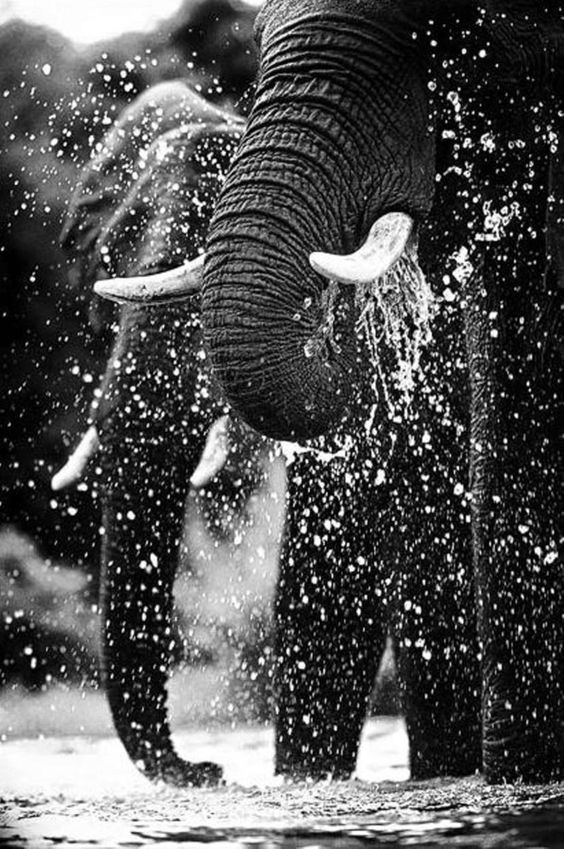 Wildlife. - The protection of wild animals is an urgent, global issue.Whether farmed for meat and by-products, or caught up in the illegal wildlife trade, many wild animals face the threat of extinction. Other wild animals are exploited for entertainment in blood sports like bear baiting and bullfighting.This charity works to protect these wild animals from exploitation and fights to keep them in the wild where they belong.