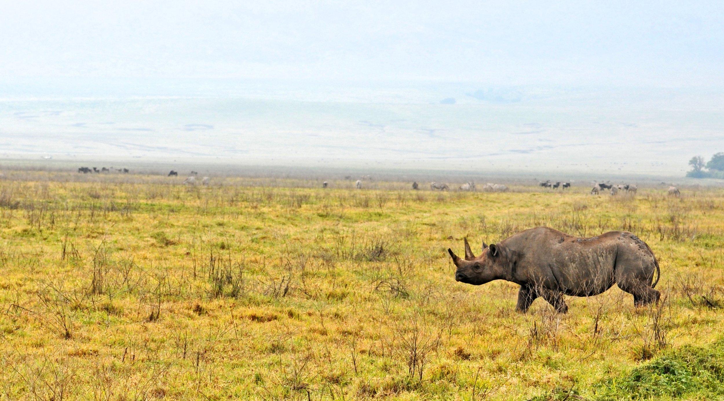 Black Rhino: -