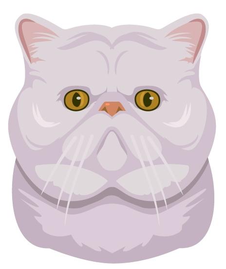 Kitty-Back-Bay-Persians.jpg