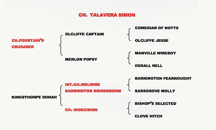 PEDIGREE OF  CH TALAVERA SIMON