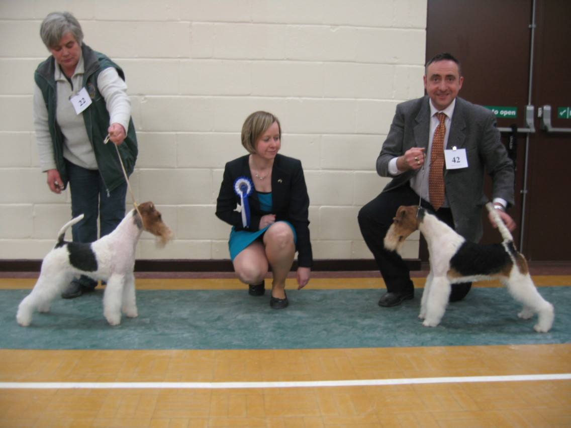 BEST DOG (right) Nethertonion Optimist & RESERVE DOG - Brocolitia Reason Why