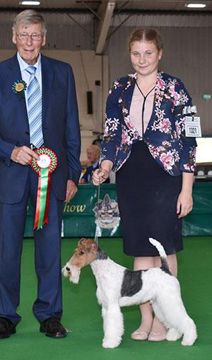 Miss P Wynter handling Best Of Breed winner Robelroy Many Dreams At Furlongfox with SpBeg Judge Mr J Carter