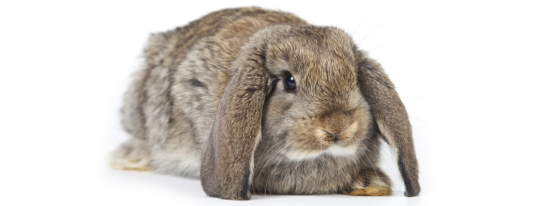 339483-rabbit header.jpg