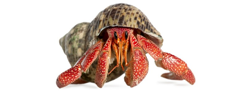 Hermit crabs? Dig 'em. -