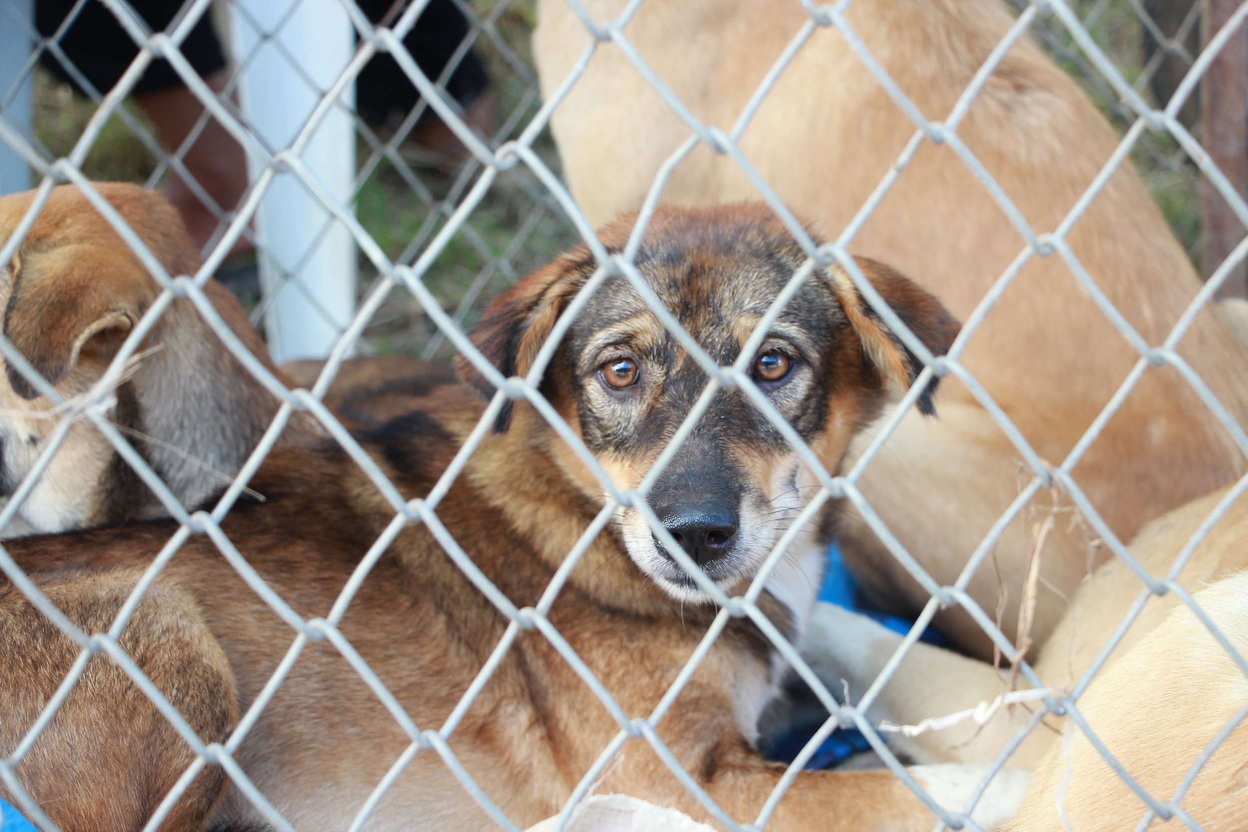 animal-breed-cage-1350563.jpg