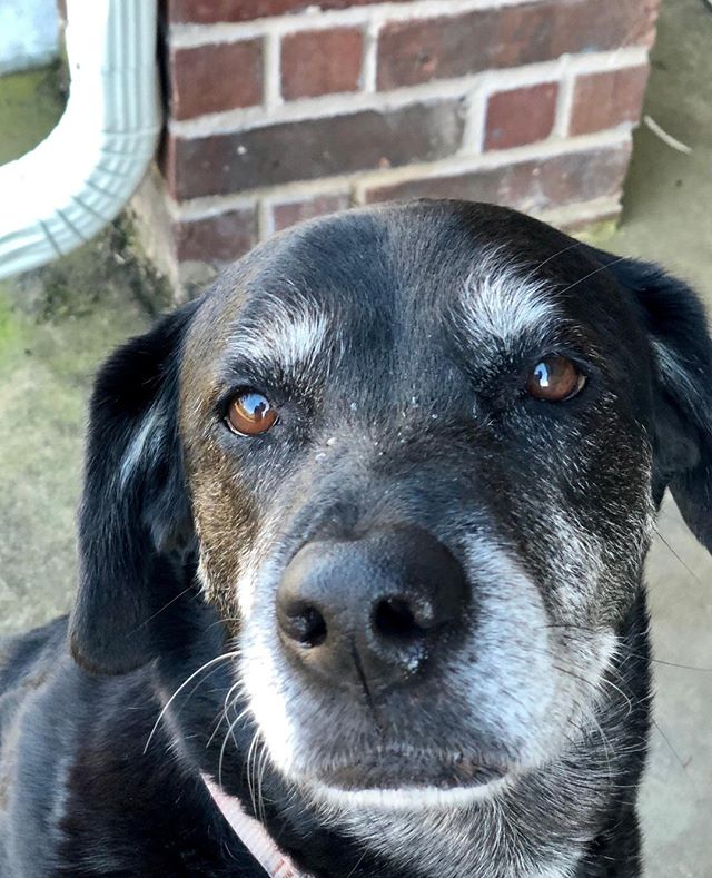 May we all be this beloved when we are elderly.  #mckinneydogs #dogsofmckinney #backyardpetsitting #furbabies