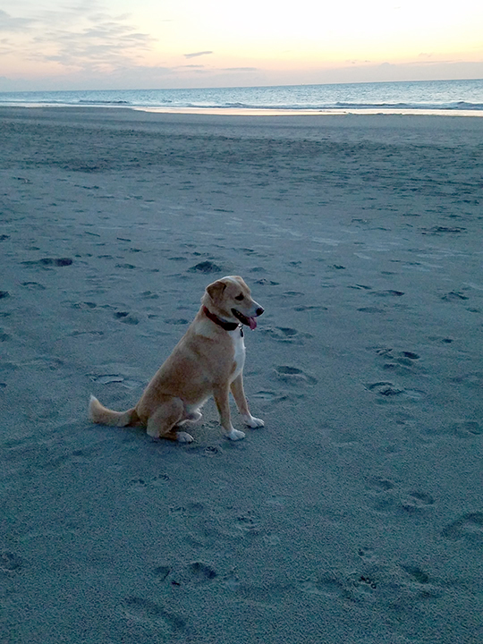 Brodi at the Beach