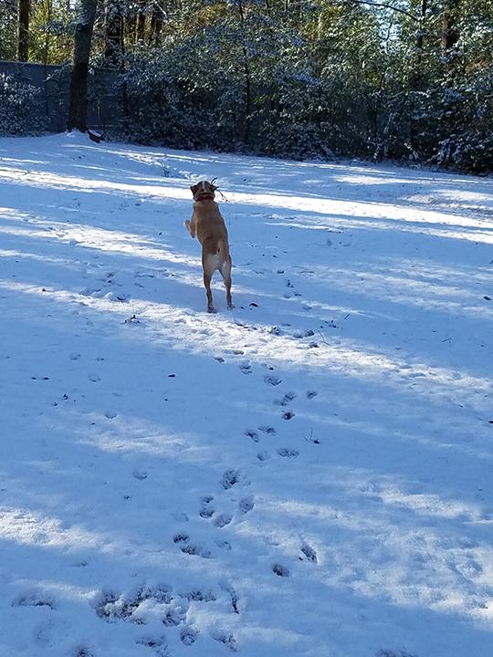 Brodi has a Snow Day