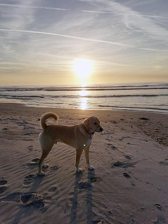 Brodi's Sunset at the Beach